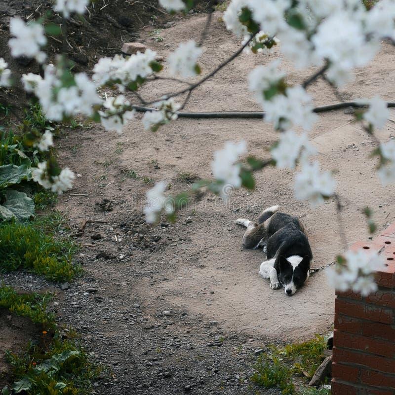 Le chien se trouve au sol photographie stock