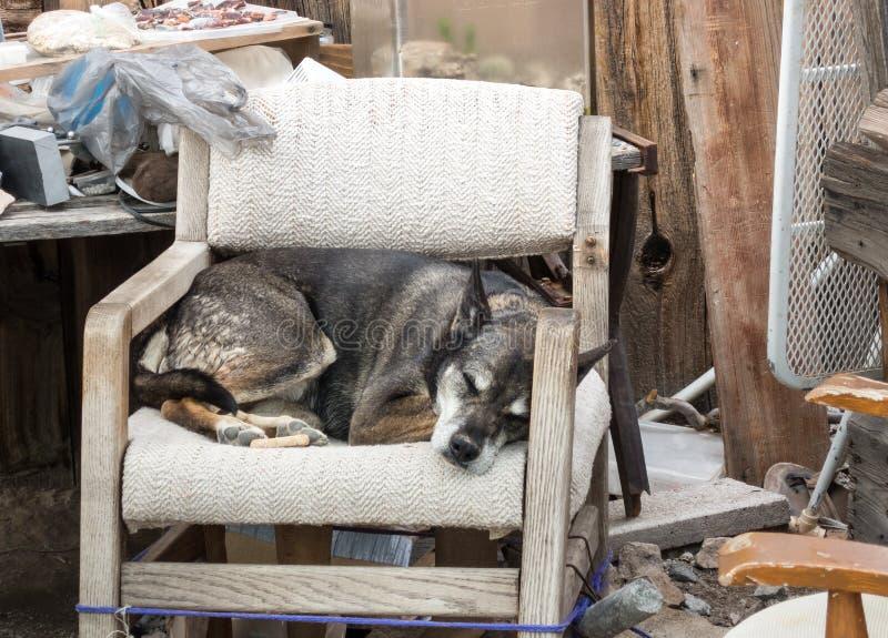 Le chien terrier d'obturation jeûnent en sommeil images stock