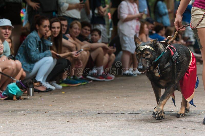 Le chien utilise l'équipement de femme de merveille à l'événement d'escroc de chienchien d'Atlanta image stock