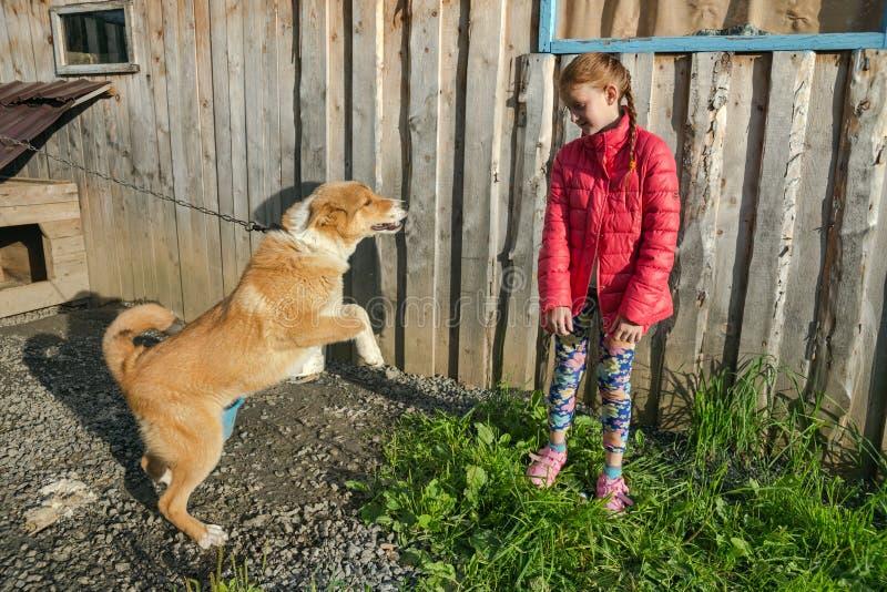 Le chien veut jouer avec la fille sur le fond d'un mur en bois image stock