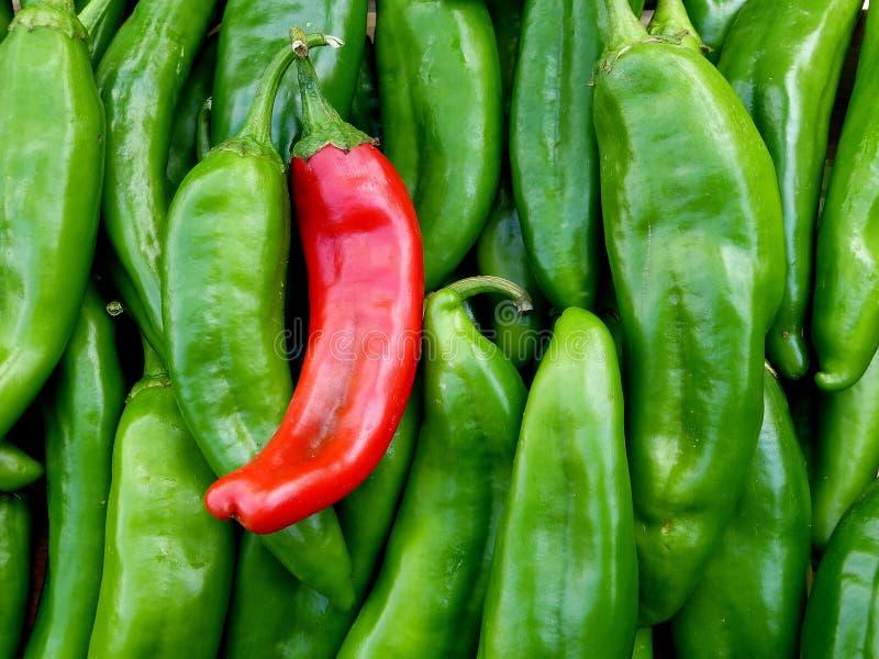 Le Chili rouge et vert du Nouveau Mexique image stock