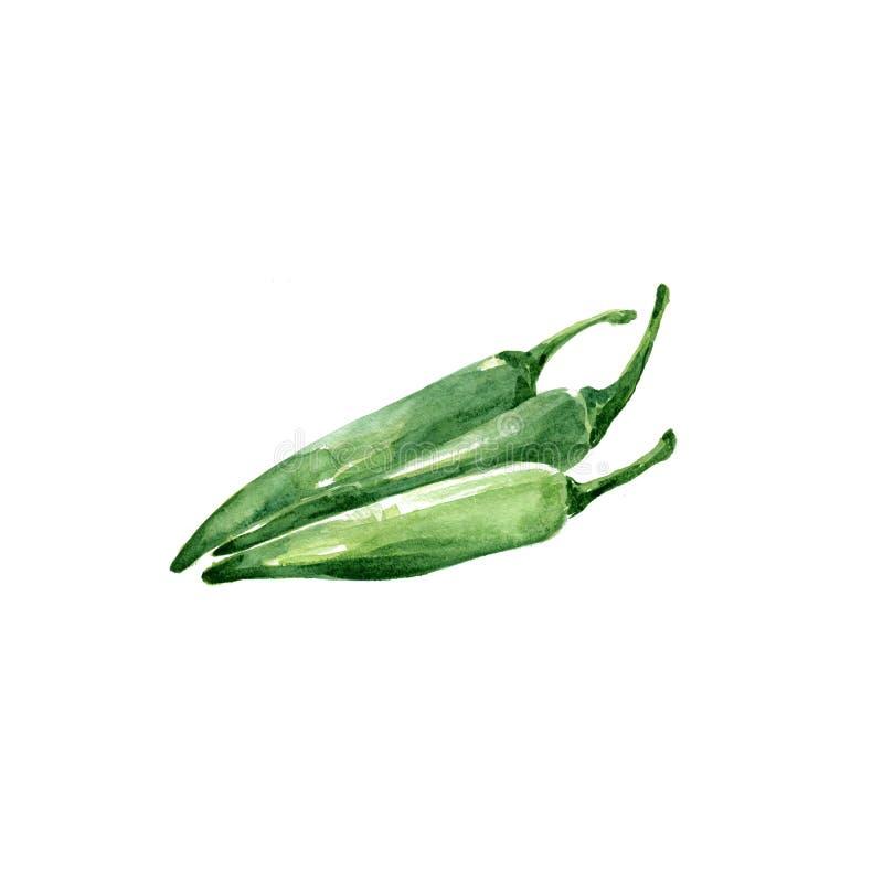 Le Chili vert illustration de vecteur