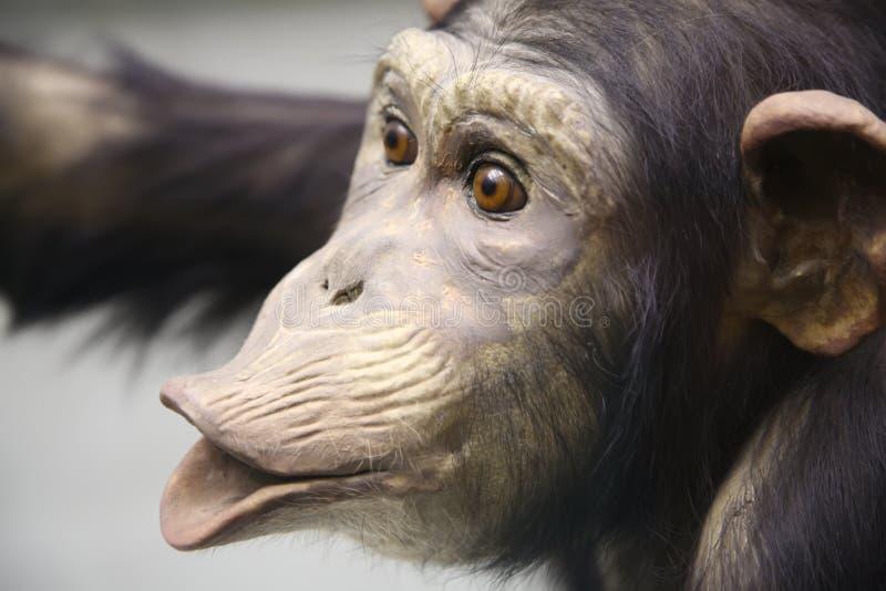 Le chimpanzé 2. photo stock