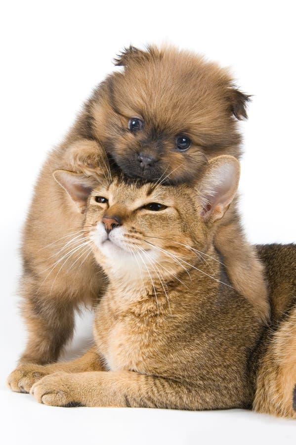 Le chiot avec un chat image libre de droits
