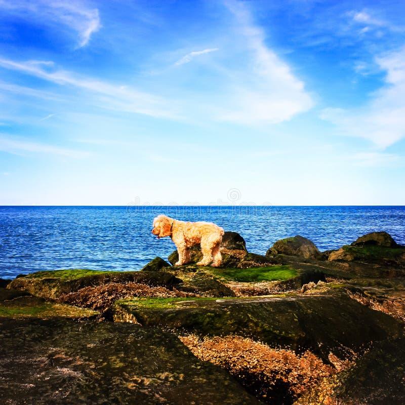 Le chiot contemple sauter dans l'océan sous le ciel bleu photos stock