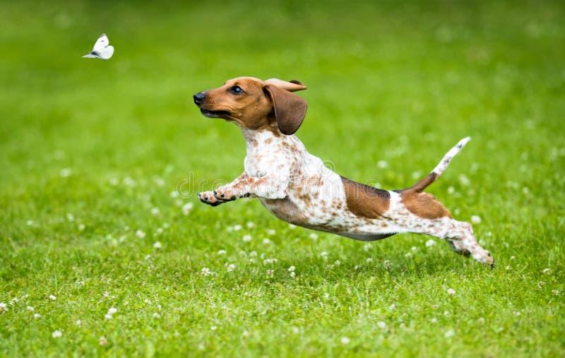 Le chiot jouent sur l'herbe photo stock