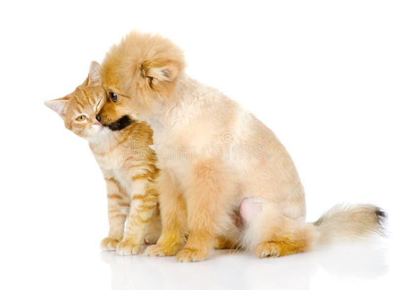 Le chiot lèche un chat. images stock