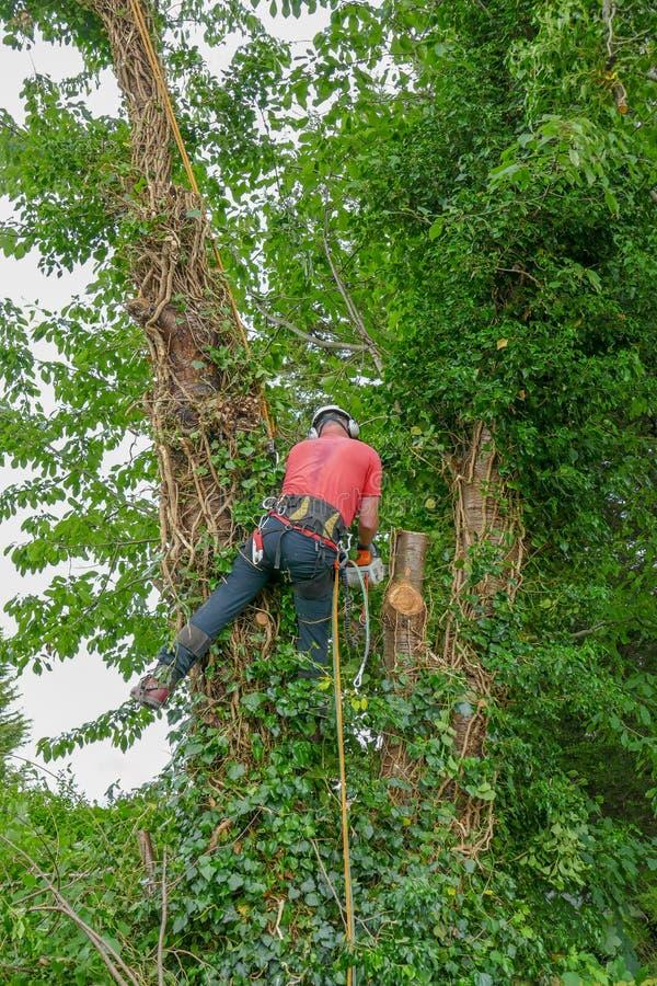 Le chirurgien des arbres à l'aide d'une tronçonneuse photographie stock