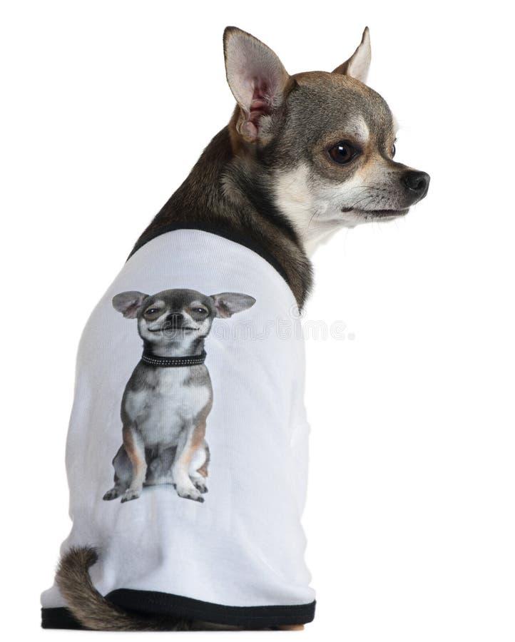 Le chiwawa a rectifié avec un T-shirt avec une photo photo libre de droits