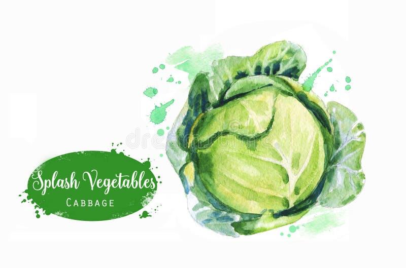 Le chou frais vert avec éclabousse d'isolement sur le fond blanc illustration de vecteur