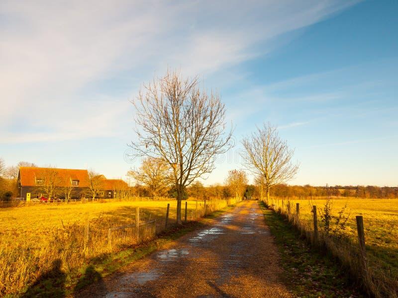 Le ciel bleu de champ de ruelle de campagne met en place les arbres nus photos stock