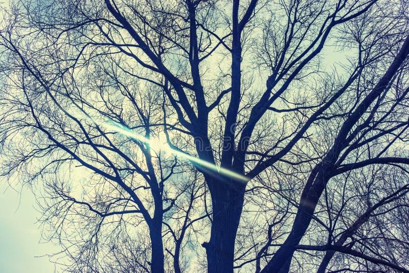 Le ciel est orageux dans les arbres photo stock