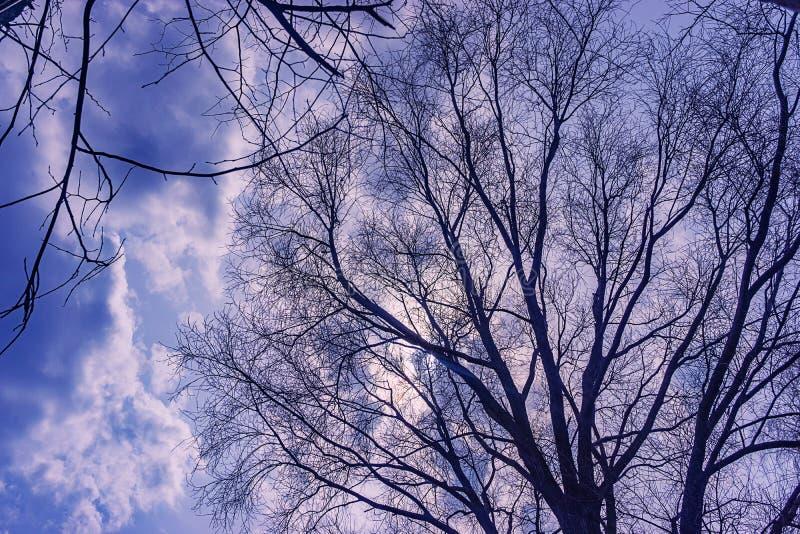 Le ciel est orageux dans les arbres images libres de droits