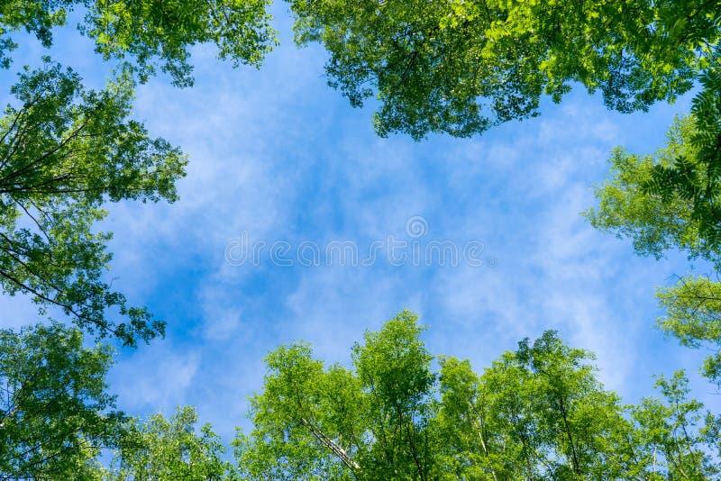 Le ciel par le feuillage, recherchent images libres de droits