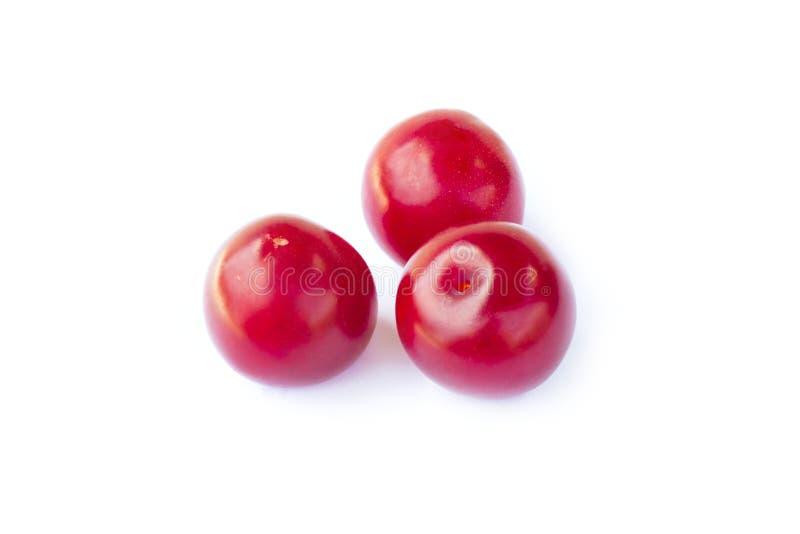 Le ciliege susine dolci fresche fruttificano, tre ciliege susine rosse mature succose, primo piano, isolato sui precedenti bianch fotografia stock libera da diritti