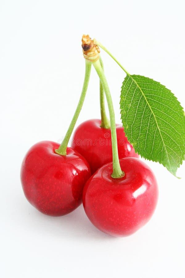 Le ciliegie mature. immagini stock