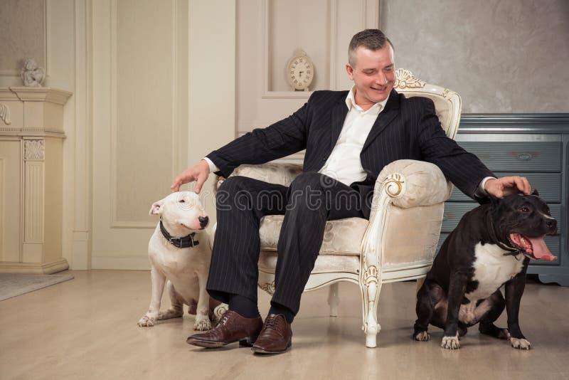 Le coccole del proprietario del cane dell'uomo due cani Il terrier nero dello staphorshire o del pitbull e più bulterrier bianchi fotografie stock