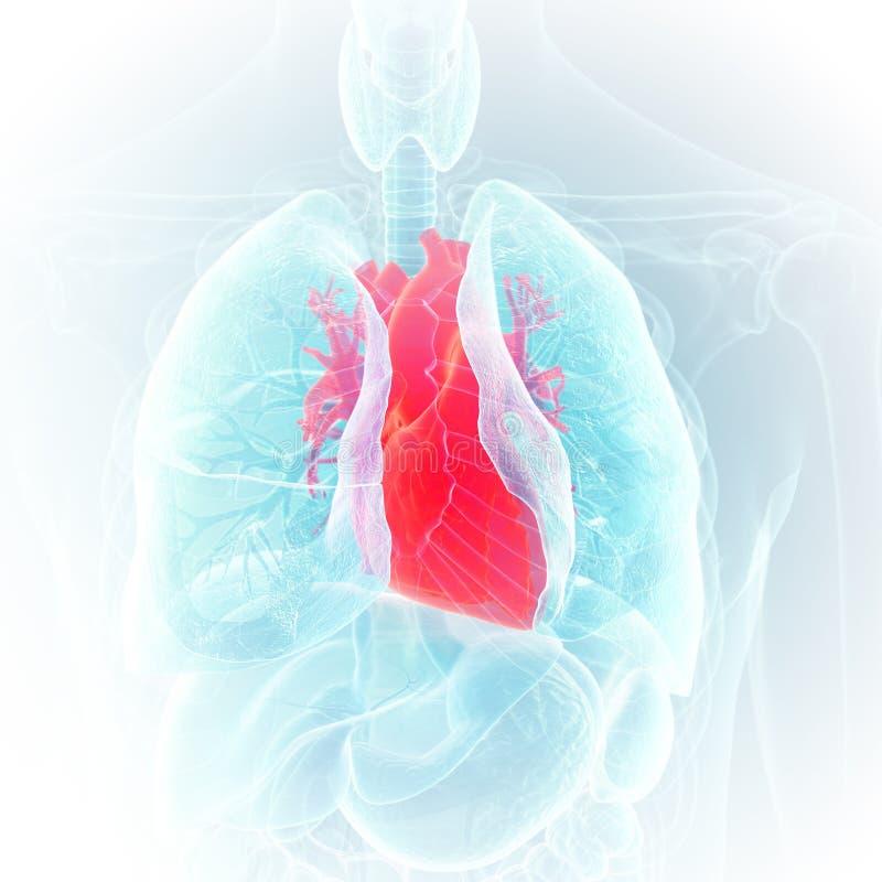 Le coeur illustration de vecteur