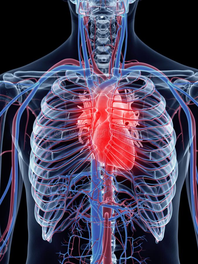 Le coeur humain illustration libre de droits