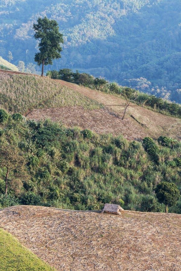 le colline della foresta pluviale con disboscamento per coltivare fotografia stock libera da diritti