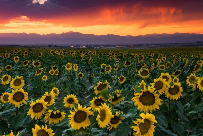 Le Colorado Front Range Rockies At Sunset photo libre de droits