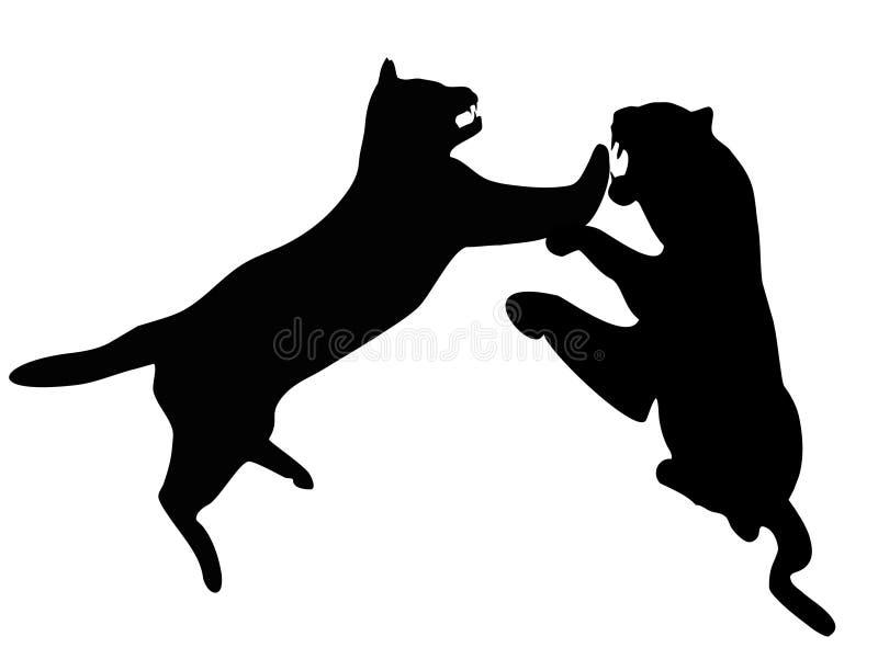 Le combat beetwen des léopards illustration de vecteur