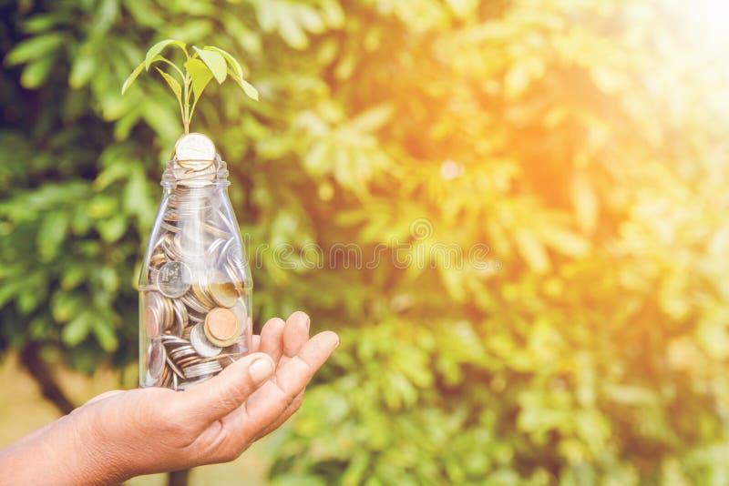 Le concept d'?conomie, mains sauvent tenir la pile d'or de pi?ce de monnaie et le petit arbre vert photos stock