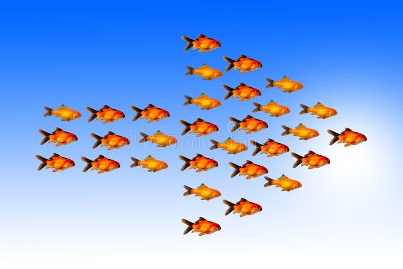 Le concept de direction avec le groupe de poissons d'or suivent la même direction avec leur chef images libres de droits