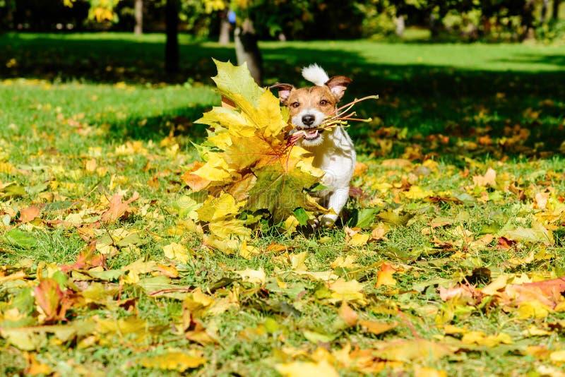 Le concept de la carte de voeux d'automne de chute avec l'érable laisse le bouquet images stock