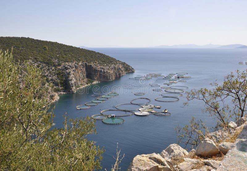 Le conchiglie coltivano per la coltivazione nel mar Egeo in Grecia fotografie stock libere da diritti