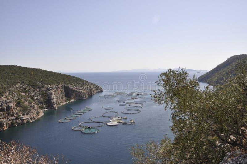 Le conchiglie coltivano per la coltivazione nel mar Egeo in Grecia immagini stock libere da diritti