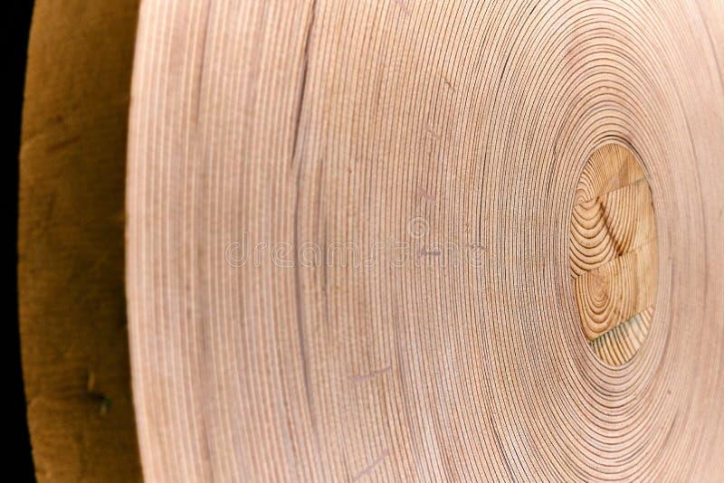 Le contreplaqué flexible a roulé dans un petit pain images libres de droits
