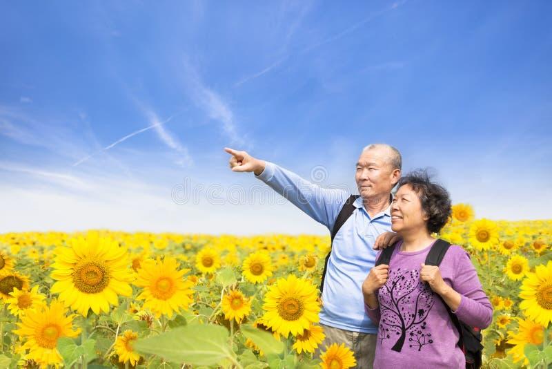 Le coppie senior felici che stanno nel girasole fanno il giardinaggio fotografia stock