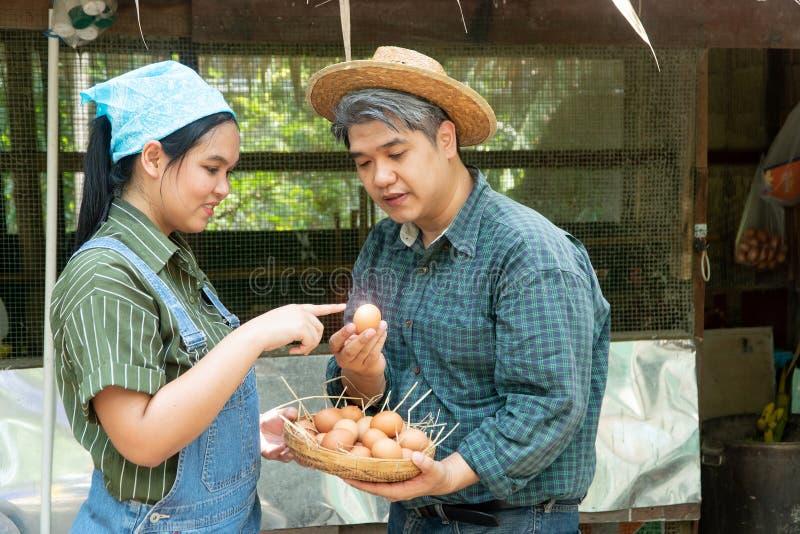 Le coppie stanno lavorando all'azienda agricola dell'uovo del pollo E stanno scegliendo le uova fresche sia per guardare felice c fotografie stock