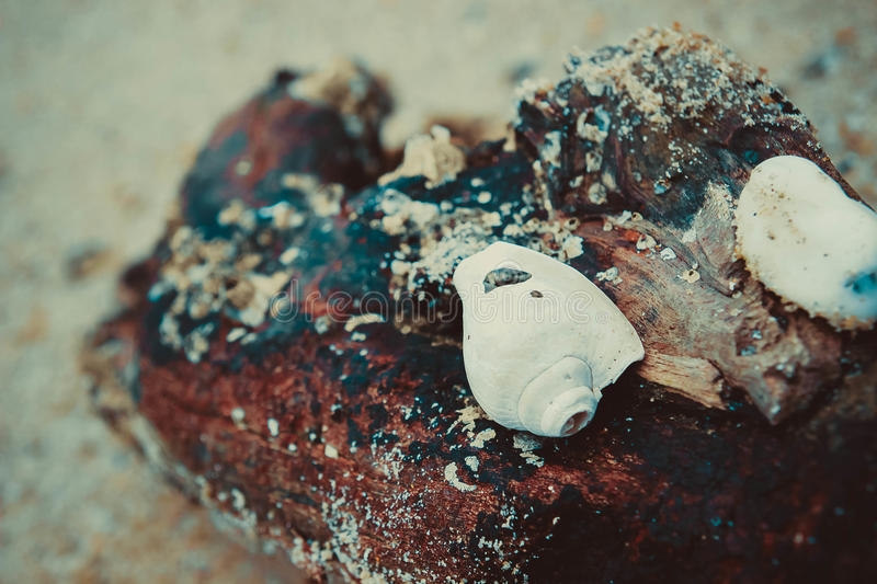 Le coquillage images stock
