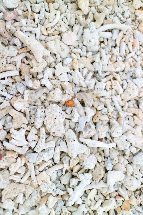 Le corail sur la plage images libres de droits