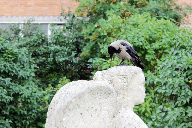 le corbeau d'oiseau repose sur la tête d'une statue un ange, que les vandales ont ébréché le nez image libre de droits