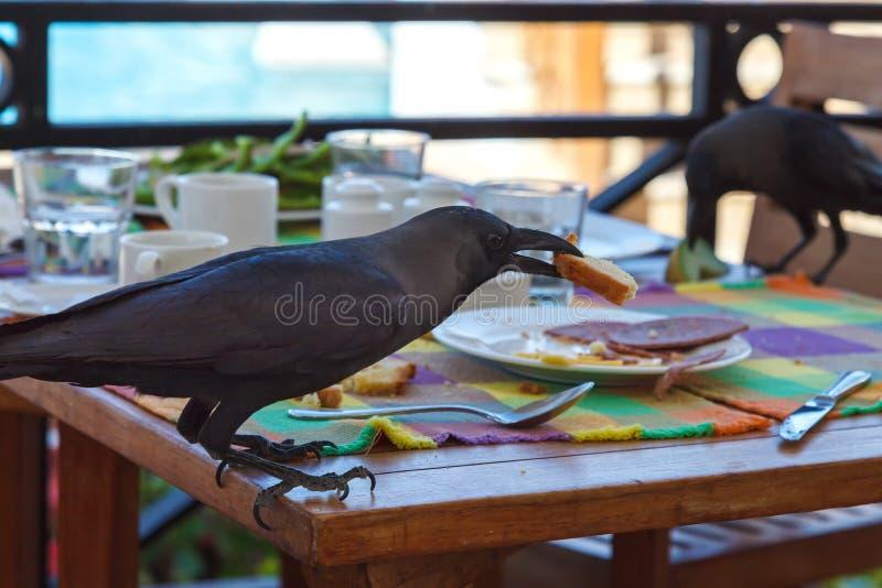 Le corbeau noir vole la nourriture de la table dans un café image stock