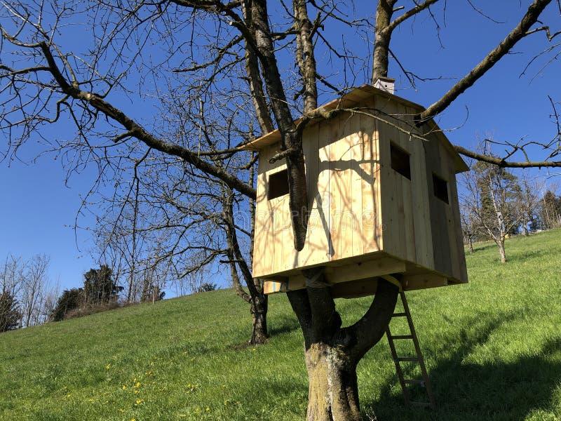 Le cottage en bois des enfants sur un arbre photographie stock