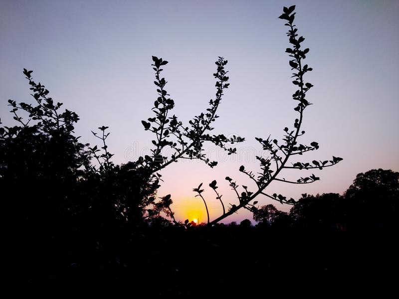 Le coucher du soleil, arbres sont bon pour notre helth Clic dans l'image impressionnante photographie stock libre de droits