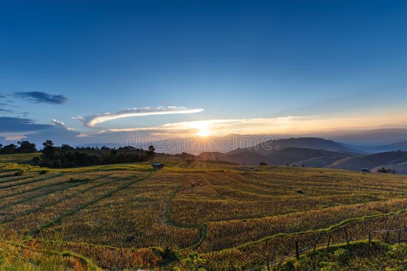 Le coucher du soleil au-dessus de la montagne avec le gisement et la chaume de riz est parti après harv photographie stock libre de droits