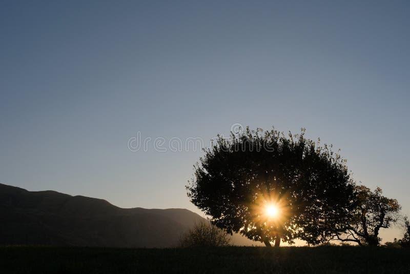 Le coucher du soleil dans les montagnes, les rayons du soleil font leur voie par la couronne de l'arbre image stock
