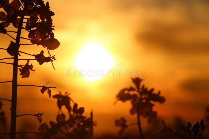 Le coucher du soleil fleurit le détail photos stock