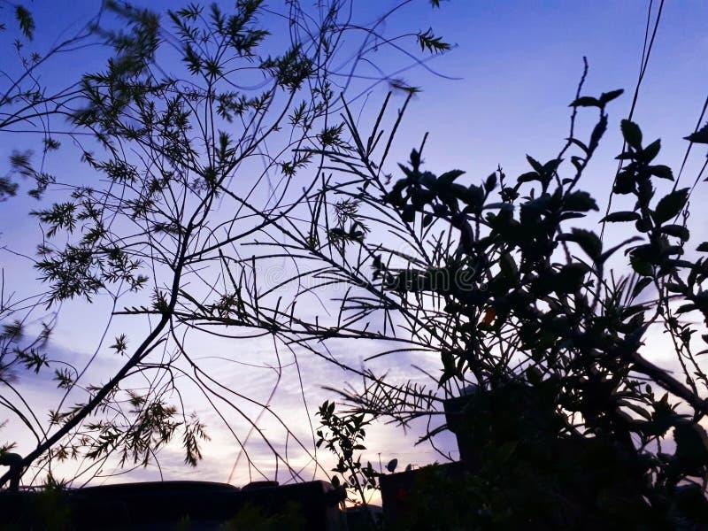 Le coucher du soleil plante le ciel photographie stock libre de droits