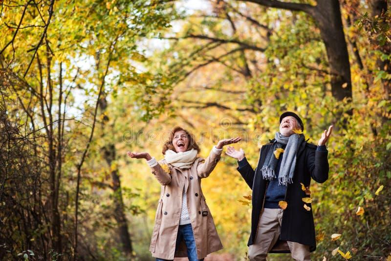 Le couple supérieur sur une promenade dans une forêt dans une nature d'automne, jetant part photographie stock