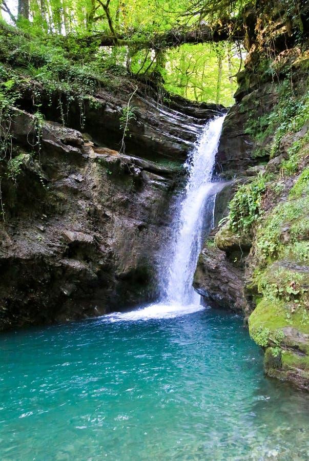 Le courant blanc de cascade de cascade de montagne de forêt tombe dans images libres de droits