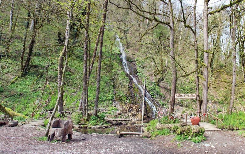 Le courant et la cascade de montagne verdissent au printemps la forêt image stock