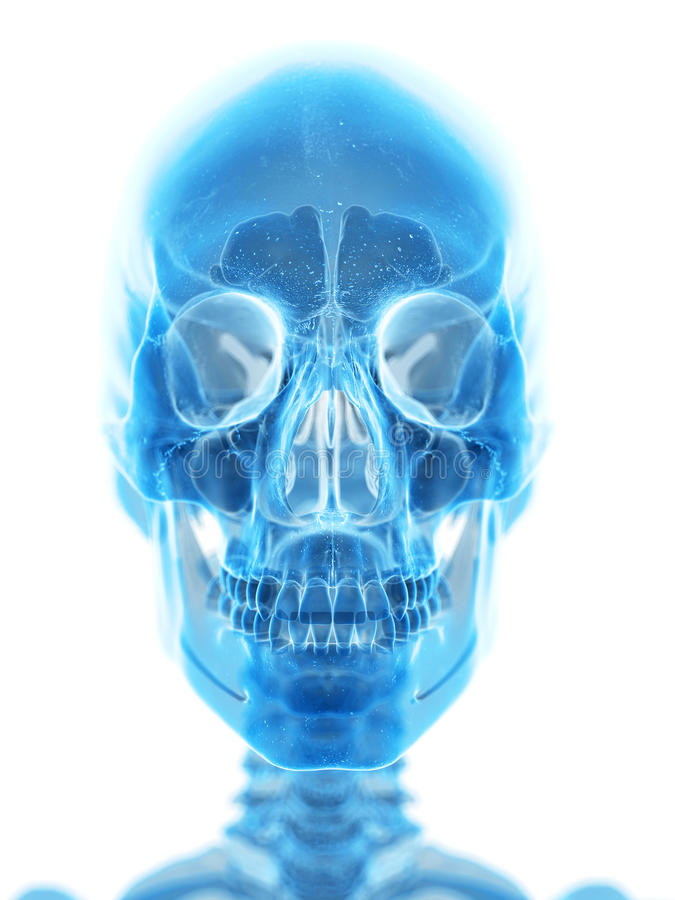 Le crâne humain illustration stock