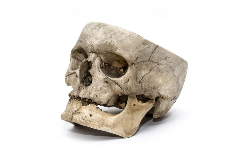 Le crâne humain du trois-quarts sur le fond blanc photos stock