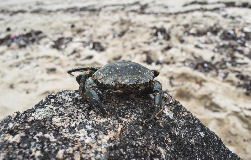 Le crabe II photo stock